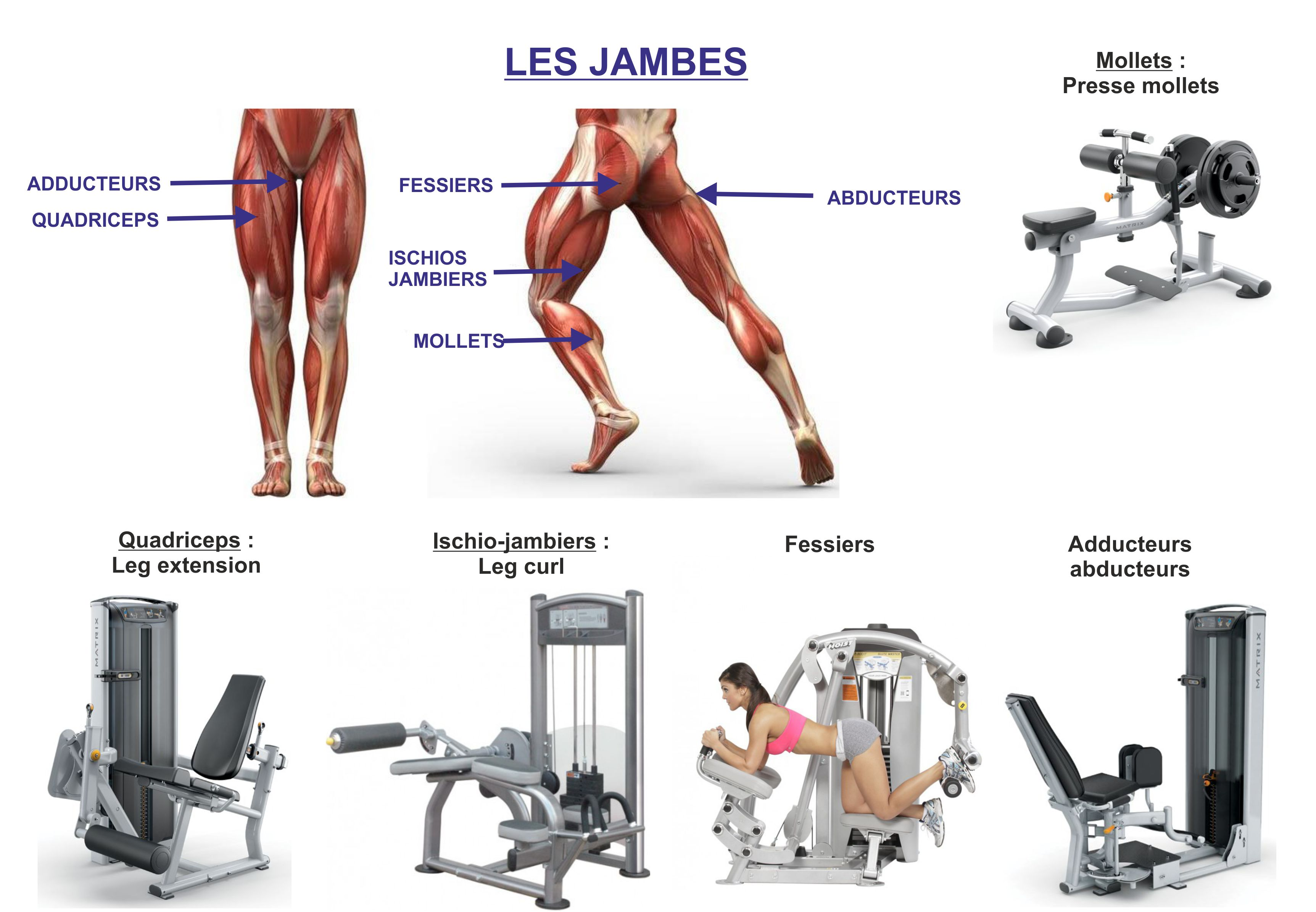 les jambes